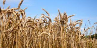 Acquisition sees Pipeline Foods expands product portfolio