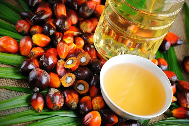 Banning palm oil not sustainable option, agriculture scientists claim
