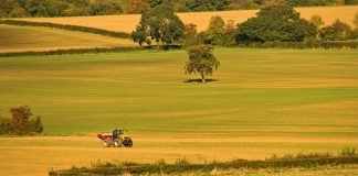 Research project launches to explore crop mixtures for sustainability