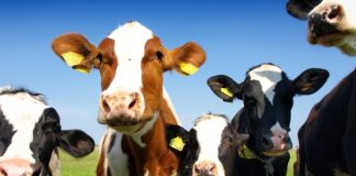 Perdue Premium Meat Company accelerates sustainable ag vision with acquisition
