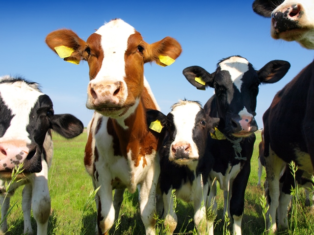 Calls for Commission of Investigation into Ireland's beef sector