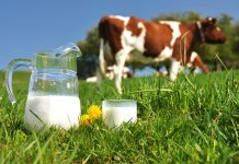 Arla Foods amba raises March milk price