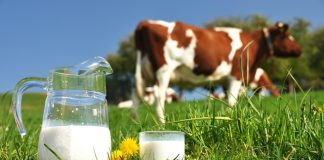 Arla to invest £460m this year