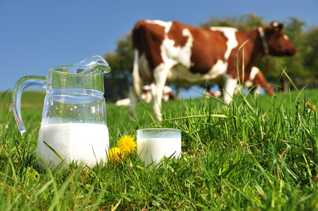 Dairy margins rise by almost 25% in 10 years, report reveals