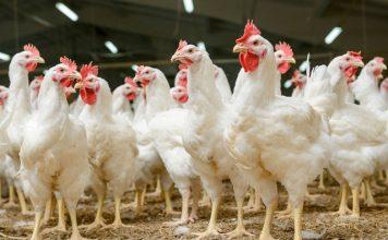 CCTV made mandatory in English slaughterhouses