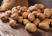 NIFA ploughs $1.85m into potato breeding research