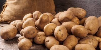 NIFA ploughs $1.85m into potato breeding research