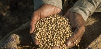 Urgent changes needed in global food system, report warns