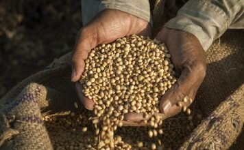 Global food prices pushed up by cereal, sugar & dairy