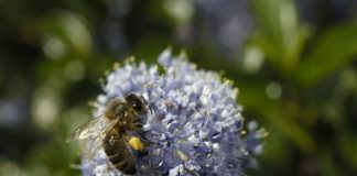 Tesco uses waste sugar to aid struggling bees