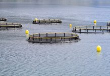 £1m boost for innovation in Scotland's aquaculture supply chain