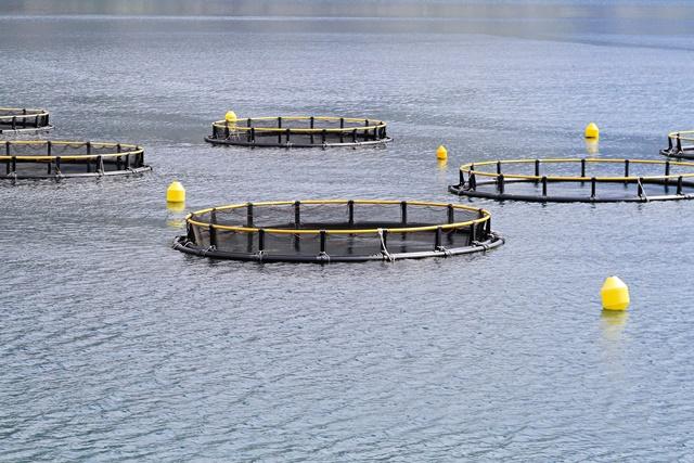 Investors call for sea change in aquaculture