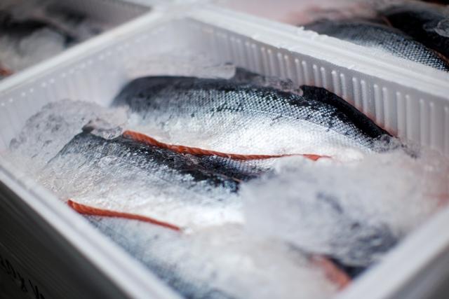 Land-based salmon farm begins commercial harvest