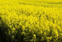 RCMA invests £25m in rapeseed processing plant