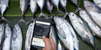 Provenance launches service for transparency in food industry