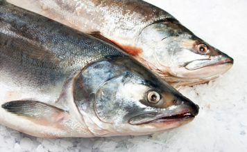 WorldFish commits $1m for aquatic foods research