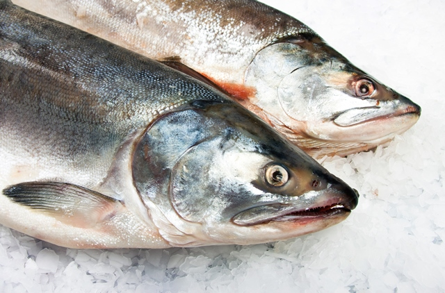 £10m fund launched for England's fishing & aquaculture sectors