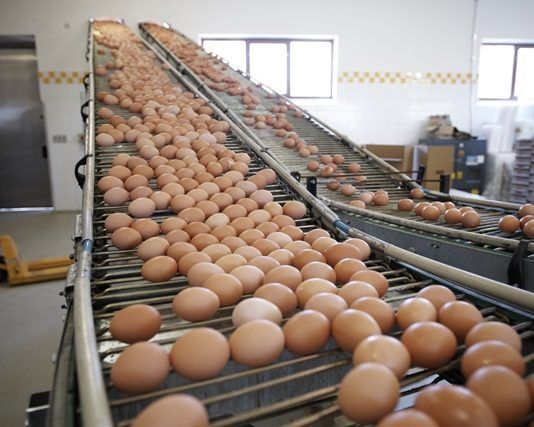 FSA assuage fears amidst Fipronil tests