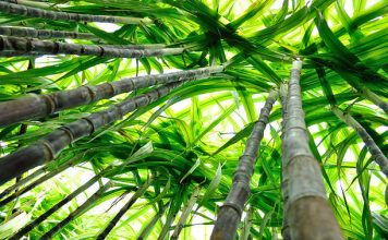 Barry Callebaut joins sustainable cane sugar platform