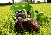 Tesco launches 'Zilla Eggs' to combat avocado waste