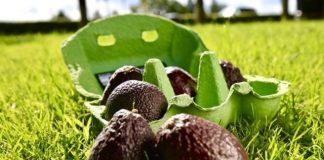 Tesco launches 'Zilla Eggs' to combat avocado waste