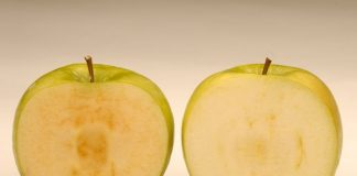 Non-browning apples set for US supermarket shelves