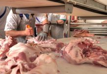 Mexican delegation visiting UK pursuing pork trade deal