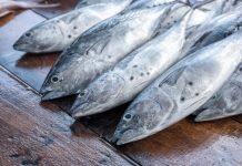 Major UK retailers raise sustainable tuna concerns