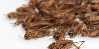 Guidance published positioning insect farming as lucrative, low-carbon option