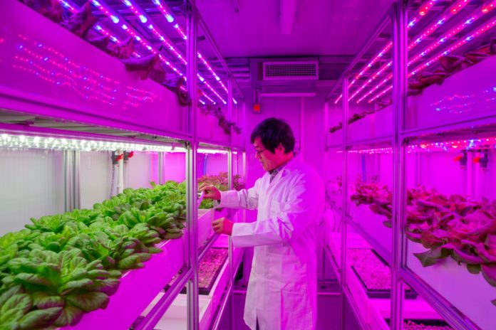 Bigger produce, better crops with vertical 'container farms', scientists claim