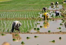 Company raises funds to scale-up precision irrigation technology