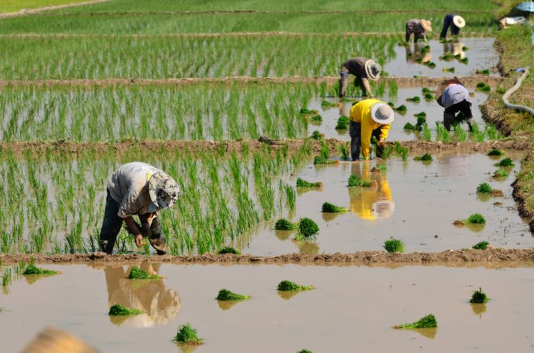 FAO & Rabobank partner for food system sustainability