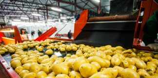 McCain Foods invests $12m in potato processing capacity