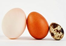 First supermarket sales for pullet eggs