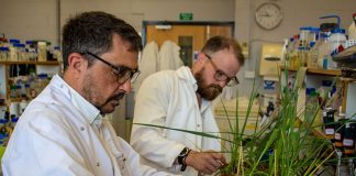 Gene breakthrough could future proof barley for climate change
