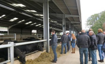 Beef processor opens farm for sustainability trials