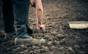 Agri-businesses failing on modern slavery statements, report finds
