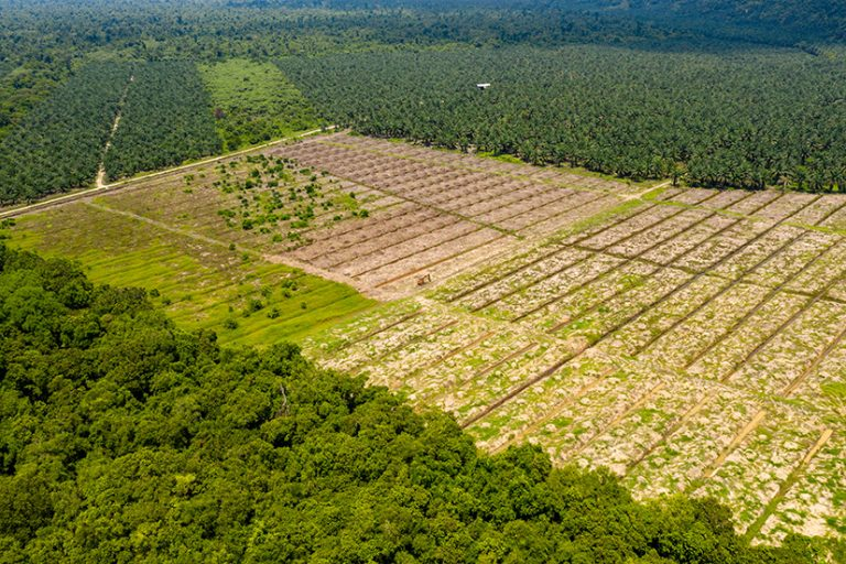 Food giants join consumer goods coalition battling deforestation