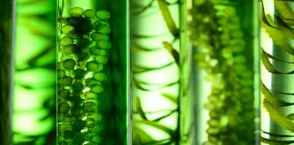 Nestlé & Corbion developing algae ingredients for plant-based products