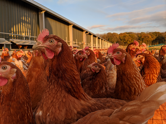 £1.1m project sees Lincolnshire farm crack egg production market