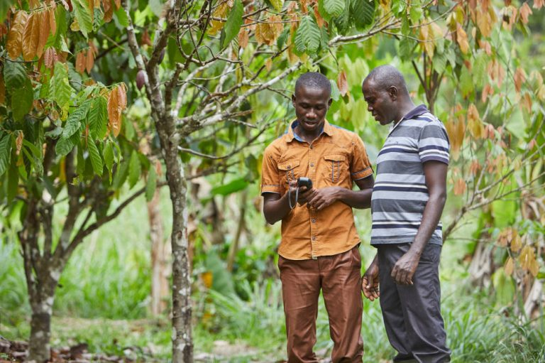 Olam achieves 100% traceability across direct cocoa supply chain