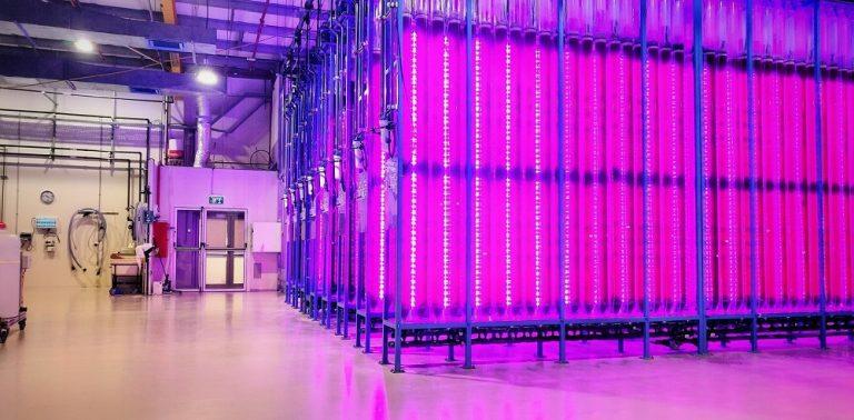 Israeli start-up opens sustainable microalgae production plant