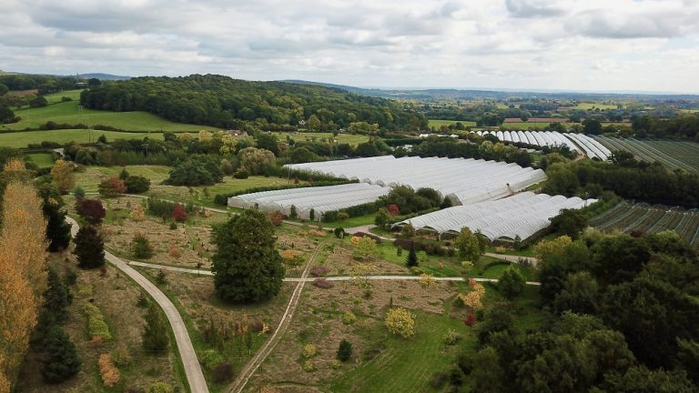 Berry Gardens develops UK's first home-grown organic blueberries