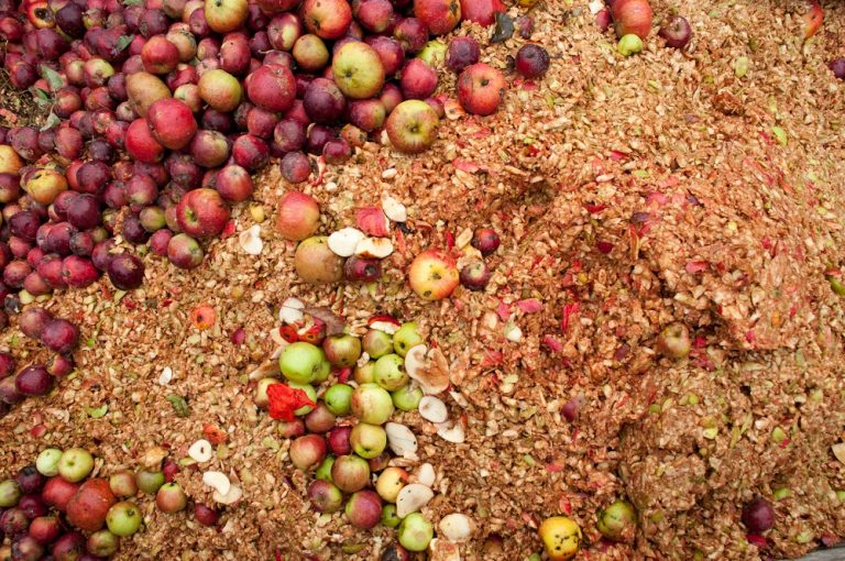 Food waste upcycling ripe for innovation, new white paper claims