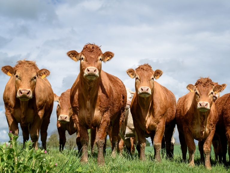 Data-driven beef contract launches in UK, setting secure price 24 months ahead