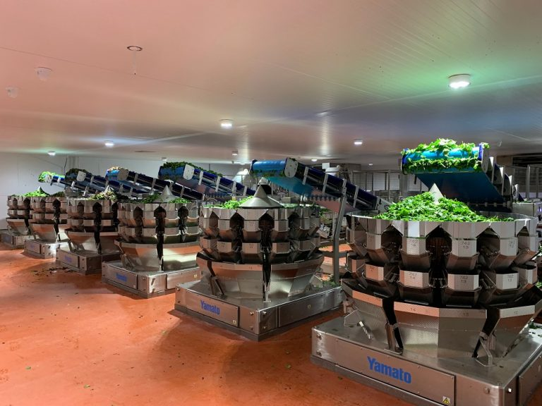 Yamato Scale Dataweigh helps Natures Way Foods create Europe's largest salad production facility