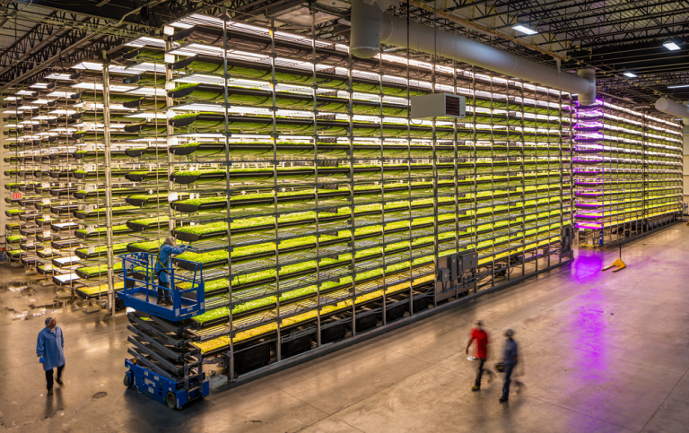 Cargill partners with vertical farming pioneer for cocoa production research