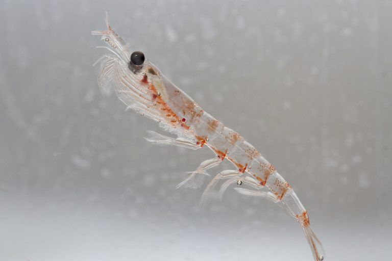 Aker to build 'world's first' krill protein pilot plant