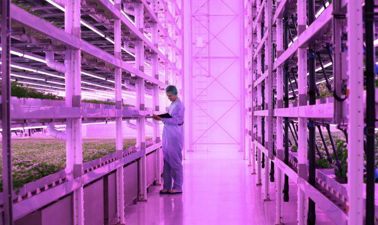 JFC breaks ground on world's biggest vertical farm